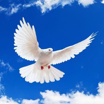 ChristianSpiteri avatar